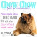 Ofertas de Petland, Chow Chow